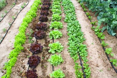 huerto_verduras
