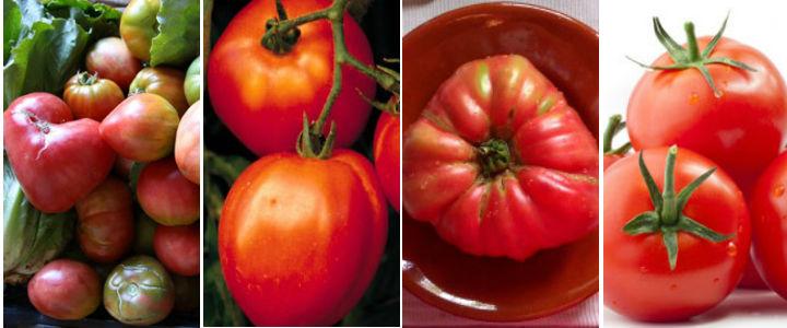 tomates variados