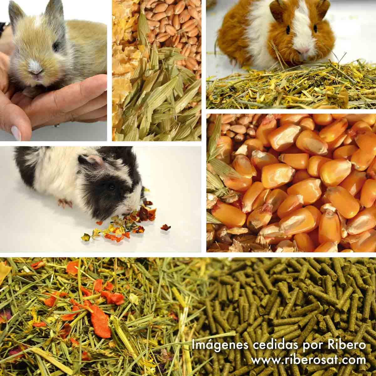 Alimentación roedores
