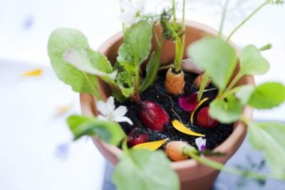 verduras maceta