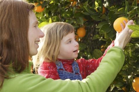 fruta hijos madre