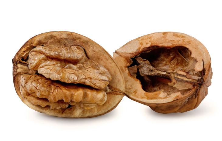 Nuez, todo lo que debes sabre sobre los frutos secos