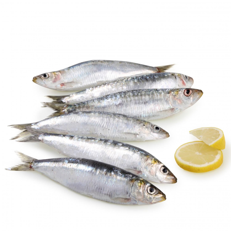Propiedades y beneficios para la salud de la sardina