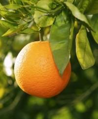 mandarina-e1327270096153