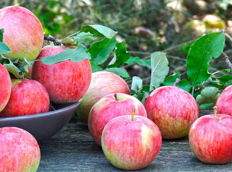 Diarrea manzana con piel o sin piel