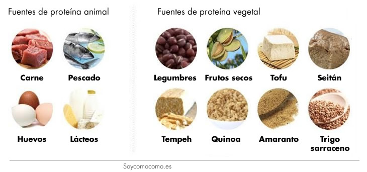 proteina_soy