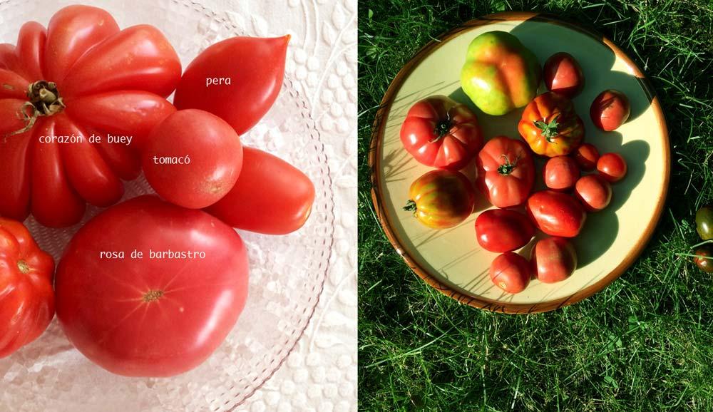 Tipos tomates
