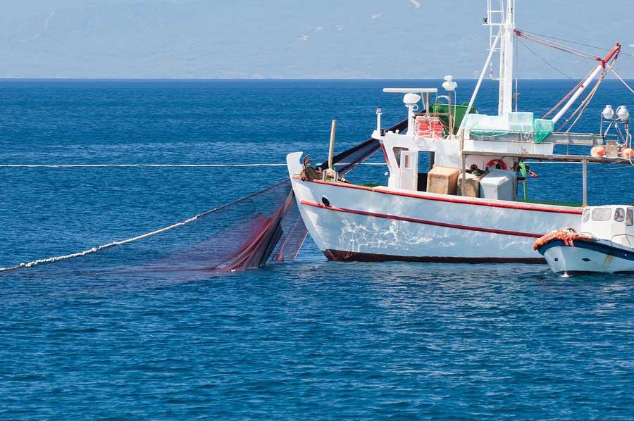 Consumir pescados locales, salvajes y de pesca artesanal