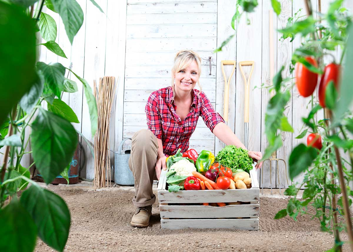 10 razones para comprar cestas de fruta y verdura ecológicas