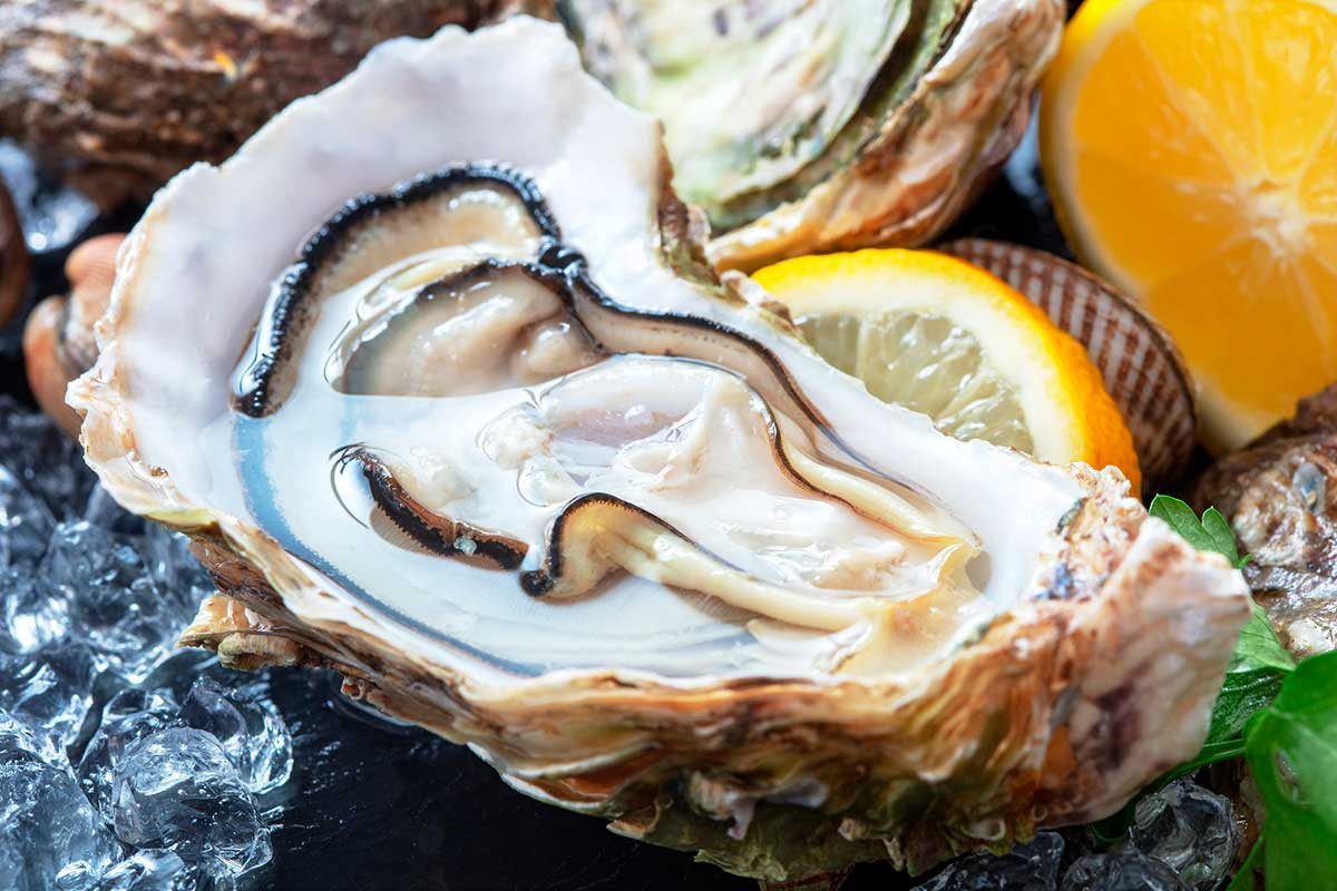 Las ostras