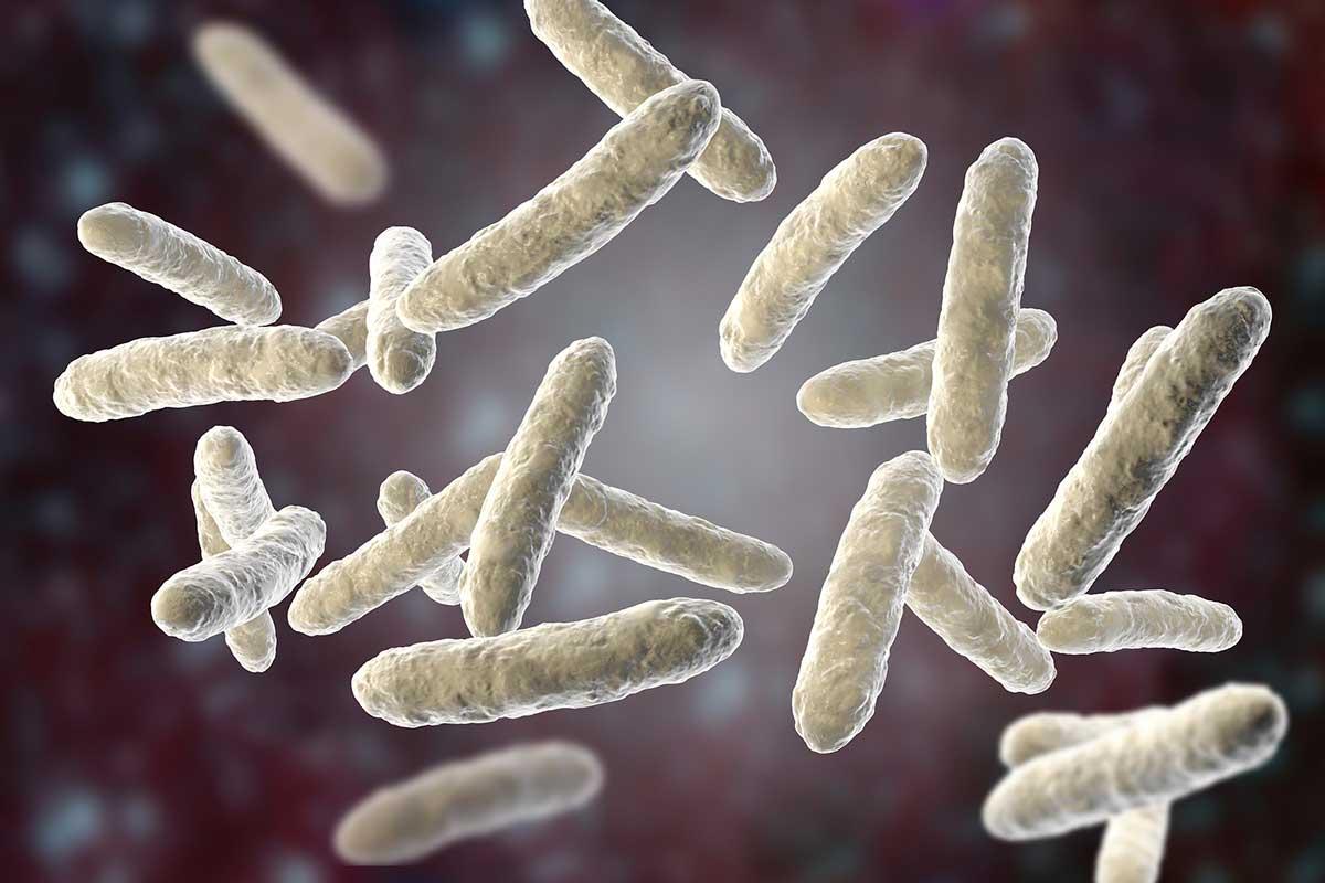 Las 10 cosas que hay que saber sobre los probióticos