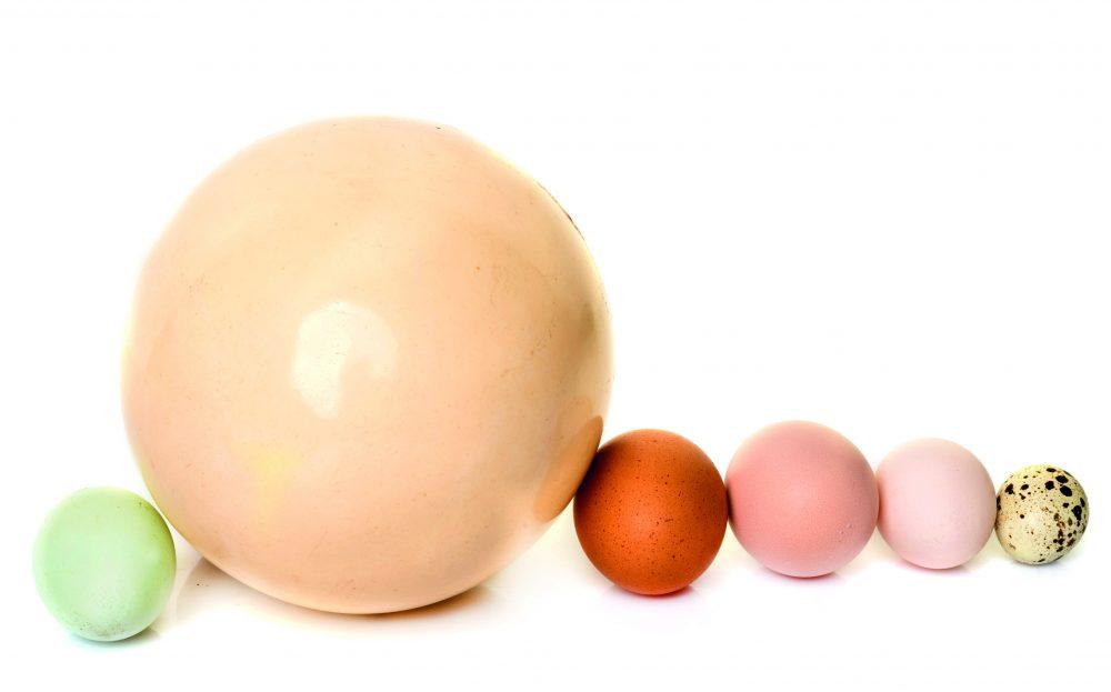 huevos de diferentes animales