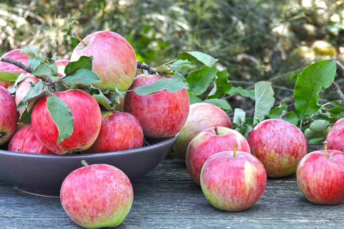 ácido ursólico de la piel de la manzana para perder peso