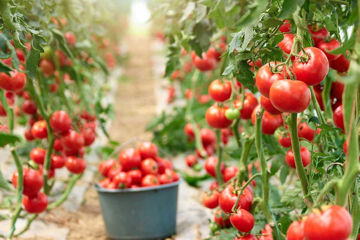 calendario de frutas y verduras de junio