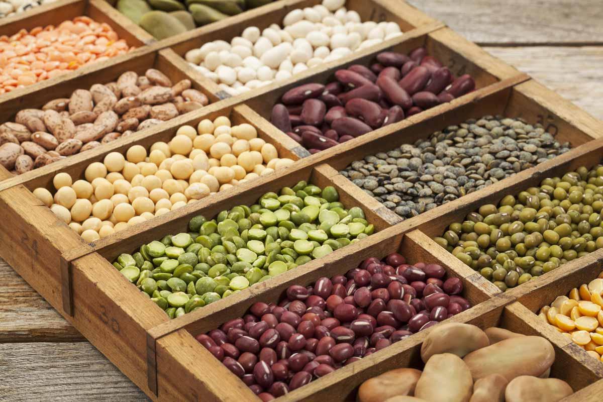 Todo lo que debes saber sobre las legumbres