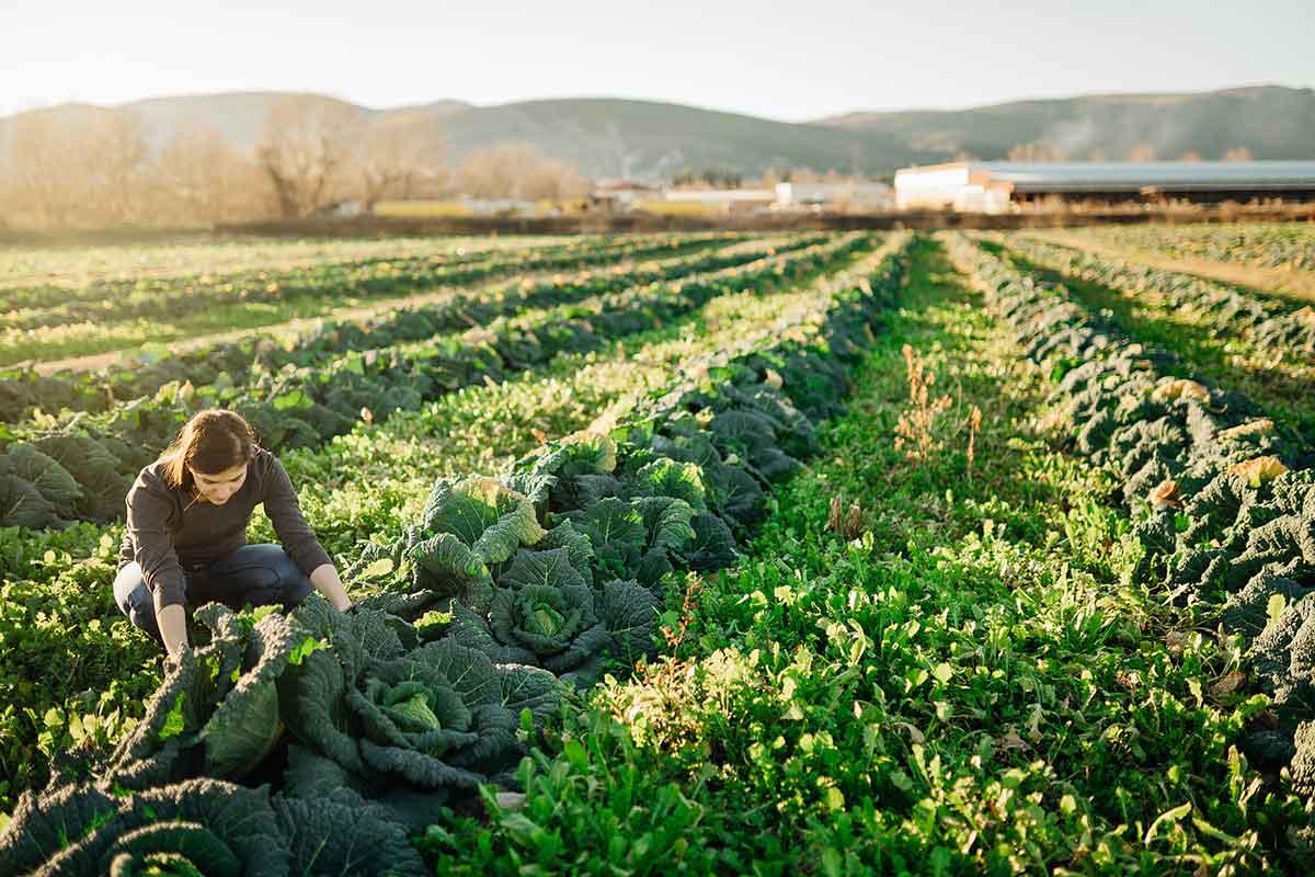 sistemas de produccion alimentaria