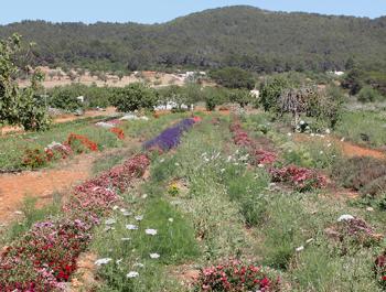 Turismo y actividades para hacer en Ibiza