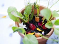 La verdura biodinámica y los ajos plantados en luna llena