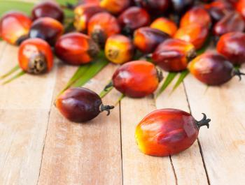 Tan malo es el aceite de palma?