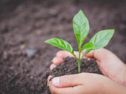 Nace una herramienta para incluir la alimentación sana en la enseñanza formal y obligatoria