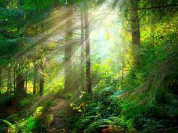Gana salud con los baños de bosque