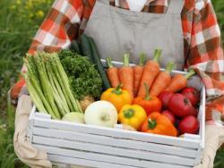 De las verduras se aprovecha todo