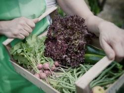 Un estudio más confirma que los alimentos ecológicos son más sanos
