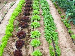 Alimentos imprescindibles que sean ecológicos