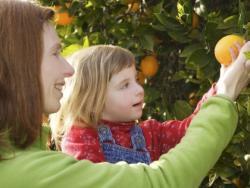 ¿Tu hijo no come fruta? ¡No te culpes!