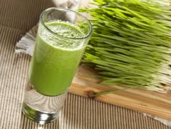 Germinado de trigo (wheatgrass)
