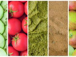 La despensa de verano: ¡los 5 imprescindibles!