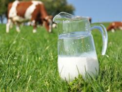 Lácteos: un hábito más que una necesidad