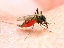 Convivir con nuestros amigos… los mosquitos