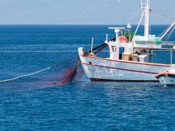 ¿Por qué el pescado salvaje no puede considerarse ecológico?