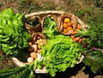 Alimentos ecológicos: la mejor inversión para tu salud
