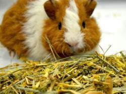 La alimentación saludable de conejos y roedores