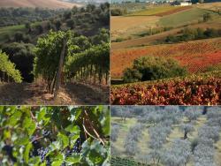 La Via del Sagrantino en Umbría: la Italia biológica y desconocida