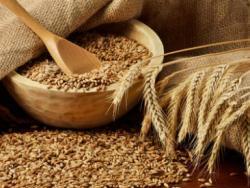 ¿Por qué hay tanta intolerancia al trigo?